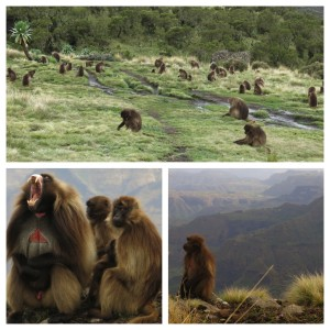 Baboons. Everywhere.