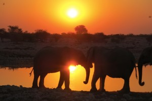 Elephants at sunset.