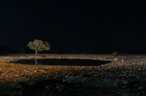 The night scene at the waterhole