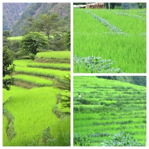 Rice paddies as we made our way through X.