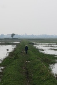 Just outside of town, a local woman tends to the waterlogged rice fields.