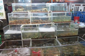 Live fish (crustaceans, amphibians and reptiles welcome) in tanks on display. At one point we saw a snake beheaded and the blood squeezed into the waiting glasses of 4 Englishmen. What?