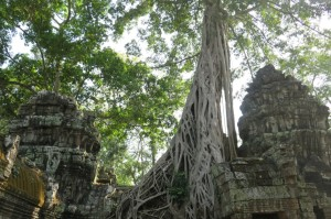Ta Prohm 2 copy
