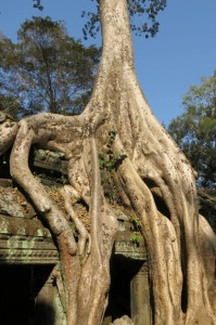 Ta Prohm 3 copy
