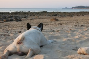Our friend. It's SO exhausting being a beach dog.