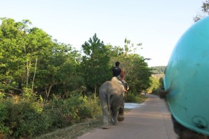 Catch the wildlife from the back of a motorbike that others are so actively riding/feeding/washing elsewhere…psssssht.
