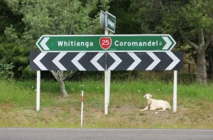 Taking cues from a local. We were pretty sure he was telling us to go toward Coromandel, so we obliged.