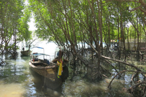 Plush parking spot for a longtail in the mangroves near town.