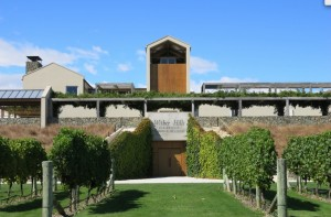 Wither Hills Vineyard copy