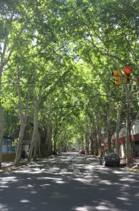 The thriving trees line the streets of downtown Mendoza.